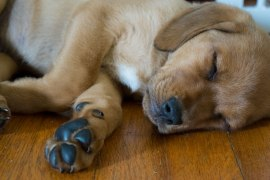 Ranger_Sleeping