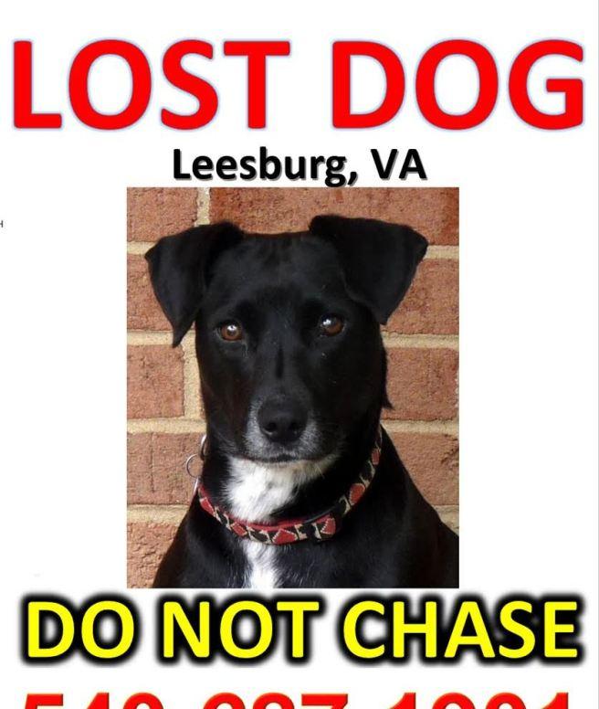 lost dog-002
