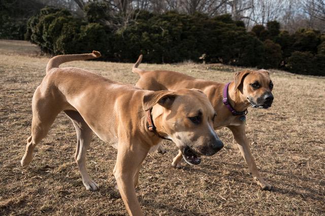 hera's pups 1